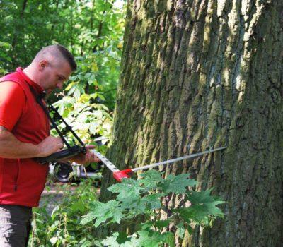 Gutachten Baumkontrolle