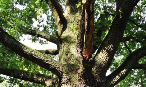 Baumkontrollen